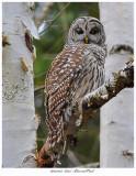 20171123  8225  Barred Owl.jpg