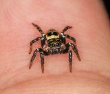 Little black and yellow jumper