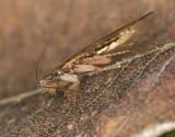 cockroach in dead leaf 50