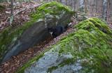 Rosie at the Rocks