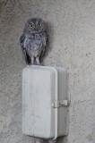 Birds Around Our Home