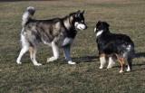 Big Dog!!!