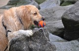 Oh, That's Where I Left My Ball