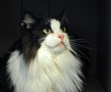 The Marilyn Monroe Of The Cat World