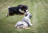 A Friendly Game Of Leap Frog