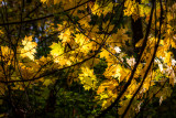Tangled Up Autumn