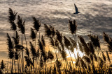 A Cold Night By The Reeds