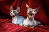 The Alien Sisters