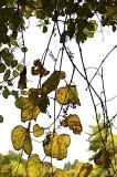 Cartoonish Looking Leaves