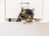 Kitten in a Drawer