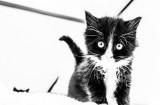 Kartoon Kitty