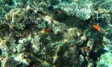 Special Reef.jpg