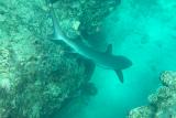 Navini, south reef edge.png
