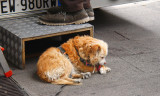 Benny,the faithful dog.