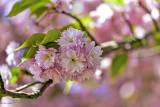 Le temps des arbres en fleurs
