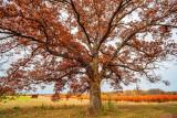 October in Michigan