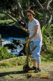 03C-26-Coconut plant washed ashore