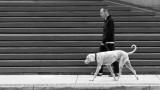 Man, Dog, Steps
