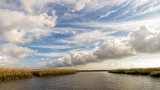 Four Pines Island.jpg