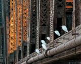 Egrets and Railroad Bridge at Dawn