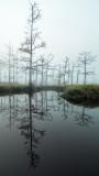 Goodbys Lake in Fog 11