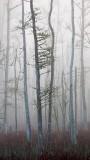 Goodbys Lake in Fog 12