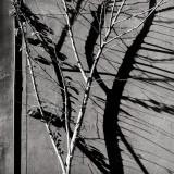 Shadow and Tree.jpg