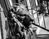 Lion Around.jpg