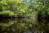 McCoy Creek