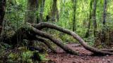 Arboretum 6.jpg