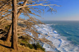 Cliff Trees Up to 20X30.jpg
