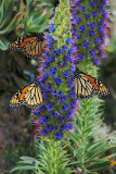 Monarch Trio (Up to 20X30)