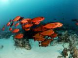 Palau July 2018