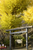 _DSC6325ps.jpg Kuzuharagaoka Jinja.jpg