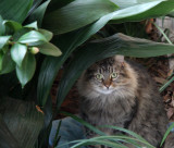One of my cats..............