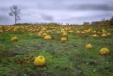 Forgotten Pumpkins