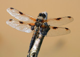 insects_gallery_1