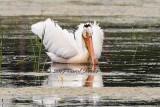 Pelican Wing Stretch
