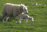 Happy Mother's Day to ewe all