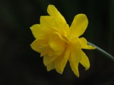 Days of raindrops and daffodils