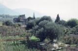 Paestum 002.jpg