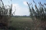 Paestum 057.jpg
