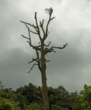 Treegarden