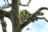 Treegarden, 500 mm telephoto