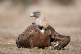 Database Birds: T - Z