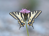 Butterflies and other macro