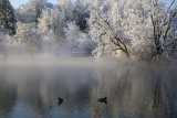 The Duck Pond: The Morning After A Snowstorm