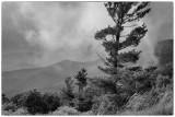 Low Clouds In Shenandoah National Park, Virginia