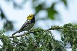 Les oiseaux en saison