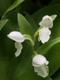 Vermont Orchids 2018